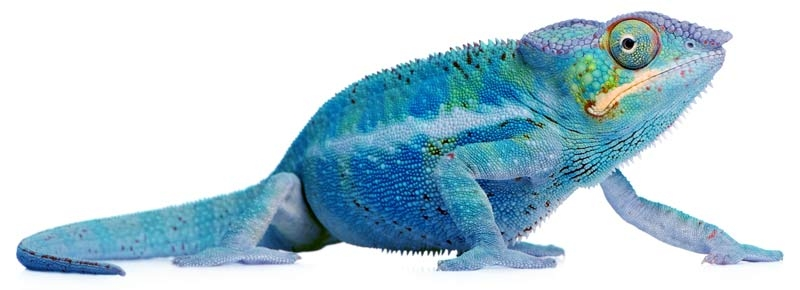 blue-cham-1